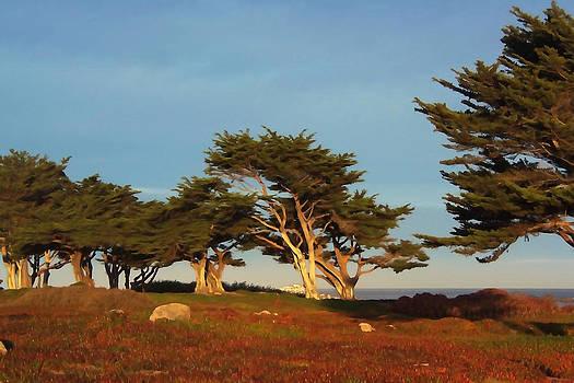 Art Block Collections - Monterey Cypress Trees