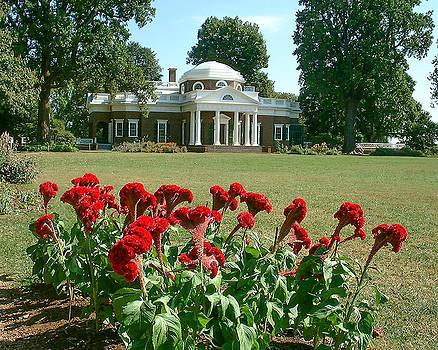 Monticello cockscomb in bloom by David Nichols