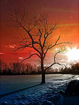 Mood with a tree by Allen Beilschmidt