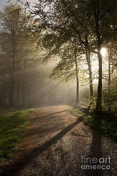 Moody Trees by Paul Felix