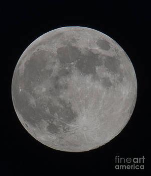 Dale Powell - Moon Closeup