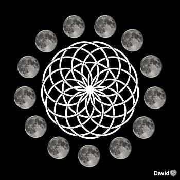 Moon Flower by David Diamondheart