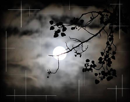 Moon Light by Andrew Sliwinski