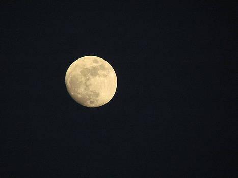 Moon by Pamela Morrow