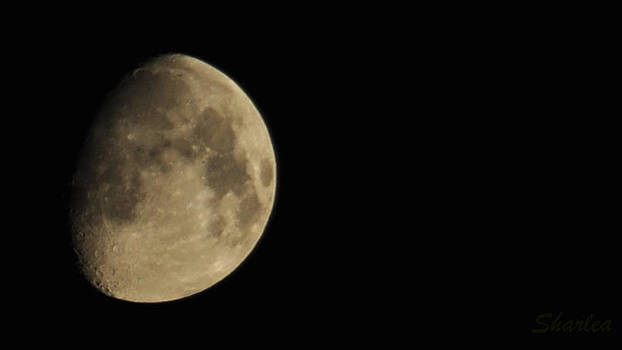 Moon by Paula Sharlea