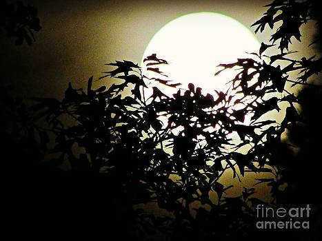 Moon Peaking by Janet Moss