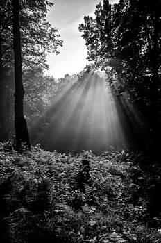 Moon Ray in the Forest by Christopher Broste
