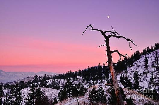 Moon rise by Robert Nowland