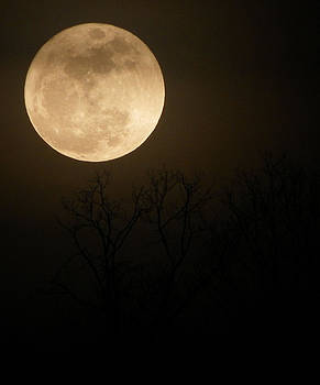 Moon Rise by Suzie Banks