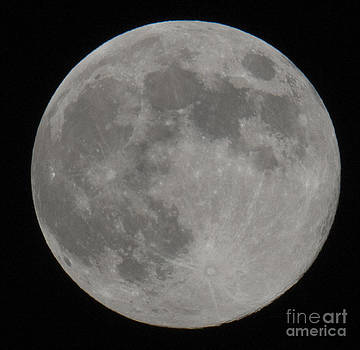 Dale Powell - Moon Shot