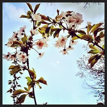 #moon #sky #dusk #flowers #springtime by A Loving