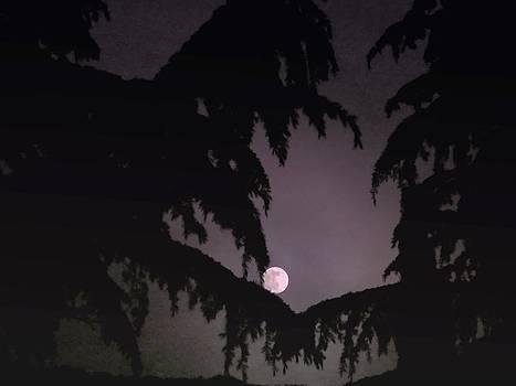 Rick Todaro - Moon Sleeping In Fir Tree Boughs