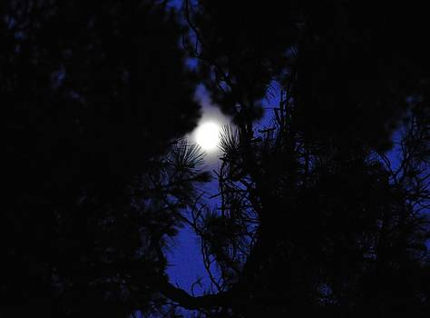 Moon Through Pines by Cherie Haines
