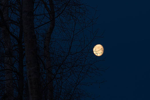 Moon Through Trees by Emily Henriques