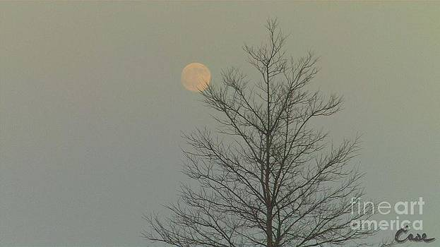 Feile Case - Moon Tree Fall Haze 12 10 2011