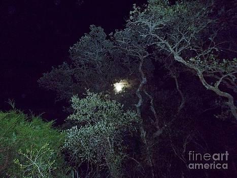 Moon by Valerie Shaffer