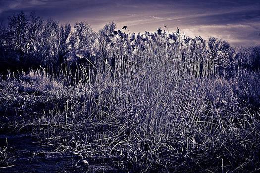 Moonlight in Wetlands 2 by  Garwerks  Photography