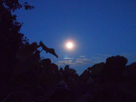 Yuriy Vekshinskiy - Moonlight night