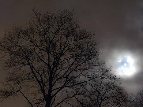 Moonlight Sonata by Bucko Productions Photography