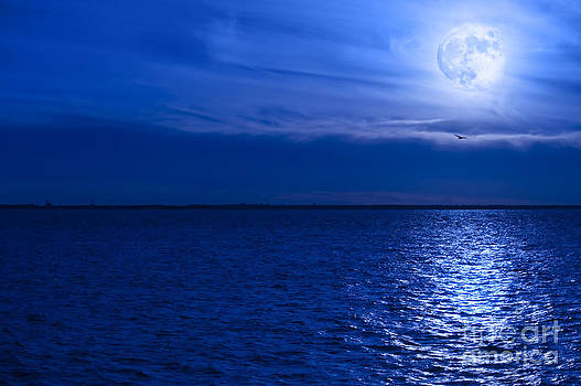 Moonlit Flight by Clear Sky Images
