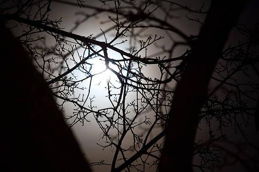 Moonlit View by Elizabeth Richardson