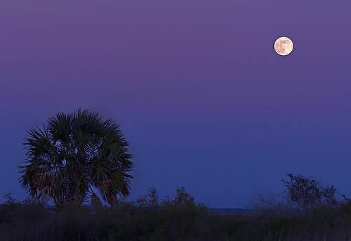 Bill Chambers - Moonrise