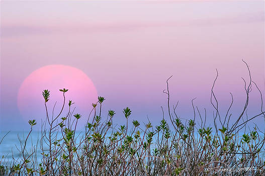 Moonrise over dunes by Stacey Sather