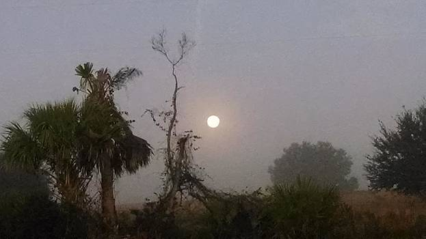 Moonset in central Florida by Nadia Korths