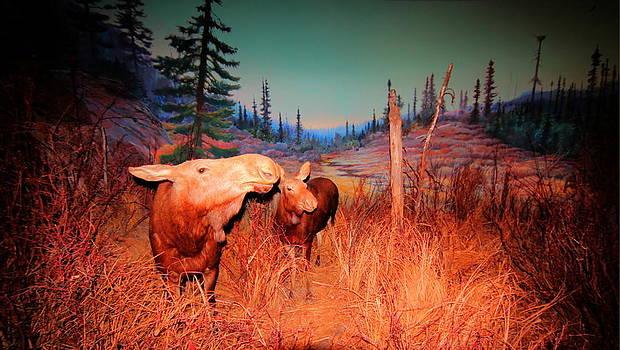 Moose ..Algonkian by Larry Trupp