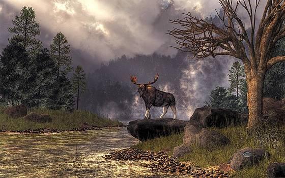 Moose in the Adirondacks by Daniel Eskridge