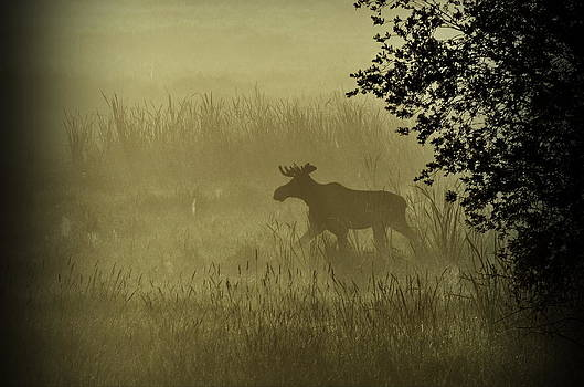 Moose in the Mist by Annie Pflueger