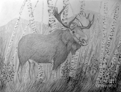 Moose by Peggy Miller