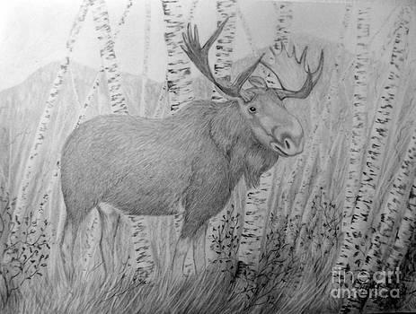 Peggy Miller - Moose