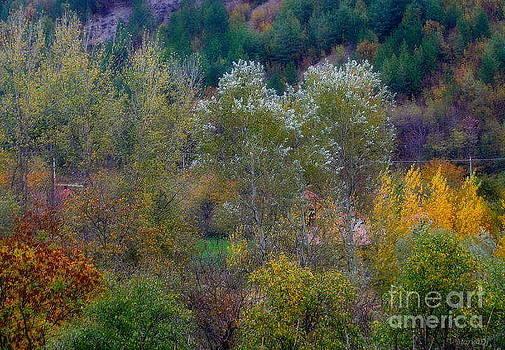 More autumn colours... by Marija Djedovic