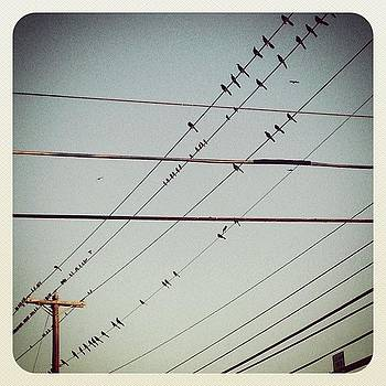 More #birds On Wire #instagram by Greta Olivas