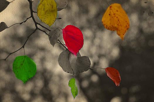 More colours by Nadeesha Jayamanne