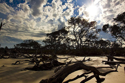 More Drift Wood Beach by Michael Ray
