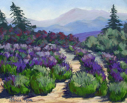More Lavender by Patricia Rose Ford