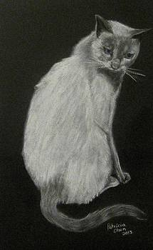 Moriah the cat by Patricia Olson