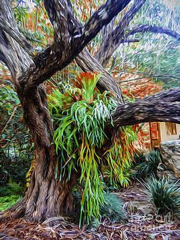 Ginette Callaway - Morikami Museum and Japanese Gardens Florida