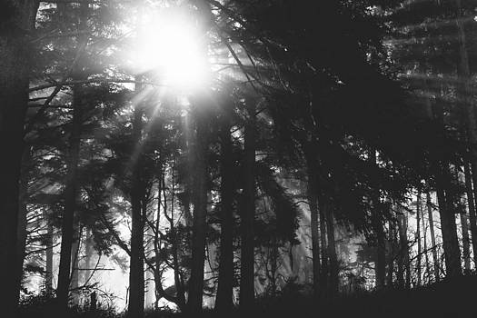 Morning Beams in the Humboldt Redwoods by Andrea Borden