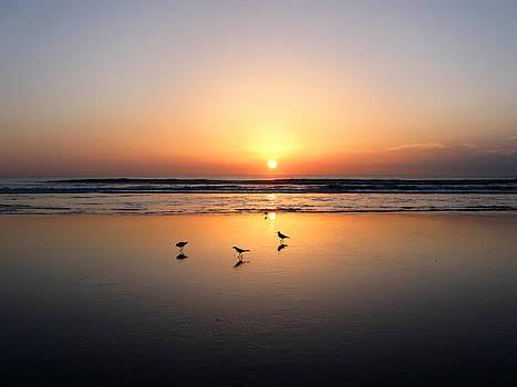 Morning Birds 2 by Cheryl Heffner