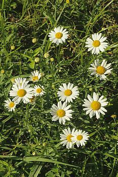 Jimmy McDonald - Morning Blooms