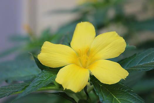 Morning blooms by Subesh Gupta