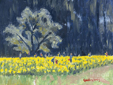 Candace Lovely - Morning Daffodil Tree