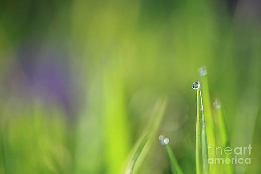 LHJB Photography - Morning dew and a little bit of sunlight