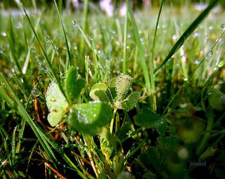 Morning Dew by Jen Seel