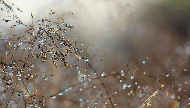 Rosanne Jordan - Morning Dew Sparkle