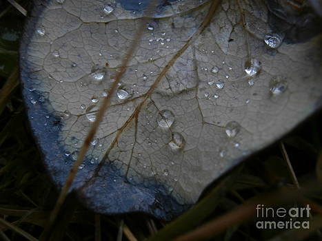 Morning Dew by Steven Valkenberg