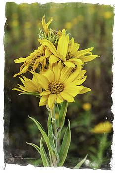 Morning Flowers by Jim Bunstock